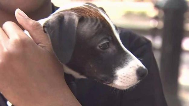 Teen Gets Surprise Puppy From Make-A-Wish Foundation