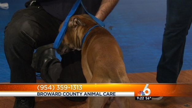 Pet of the Week: Biff
