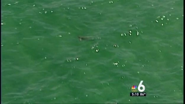 Shark Sighted Close to Shore in Fort Lauderdale