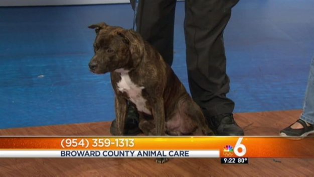 Pet of the Week: Vic