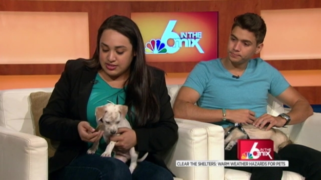 Clear the Shelter: Warm Weather Hazards