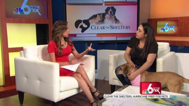 Clear The Shelter: Hurricane Readiness