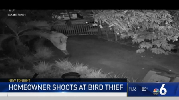 Homeowner Exchanges Gunfire With Parrot Thief: Miami Police
