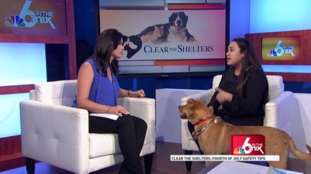 Clear the Shelters: Pet Safety Tips