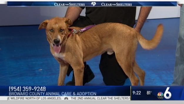 Pet of the Week: Balto