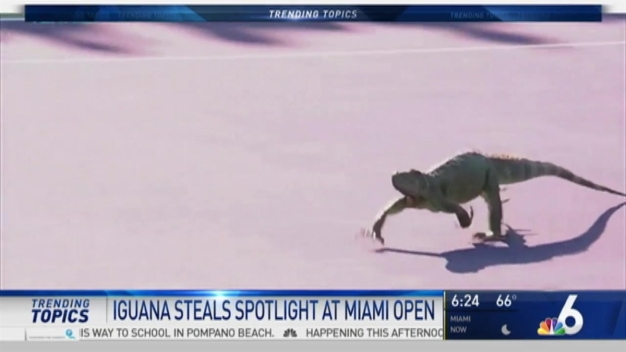 VIDEO: Iguana Takes Over Court at Miami Open
