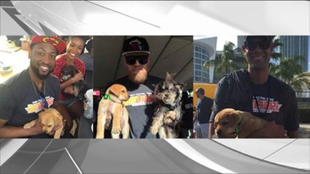 15 Dogs Find Forever Homes at Miami Heat Heatapalooza