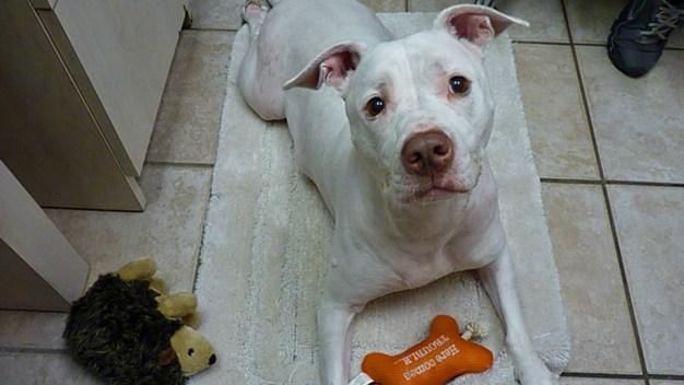 Dog Abandoned by Owner at Animal Hospital