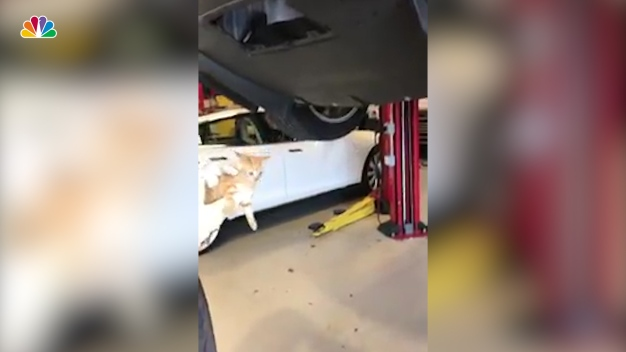 Furry Surprise Behind the Bumper: Kitten Found in Tesla