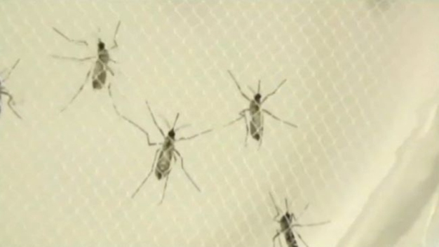 Florida Confirms Second Local Zika Virus Infection for 2017