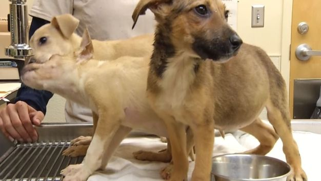 'Stuffed Animals': Three Puppies Survive After Sealed in Box