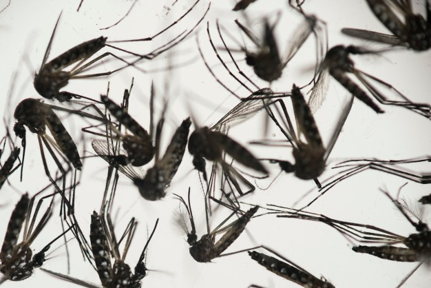 2 More Cases of Zika Reported in Florida