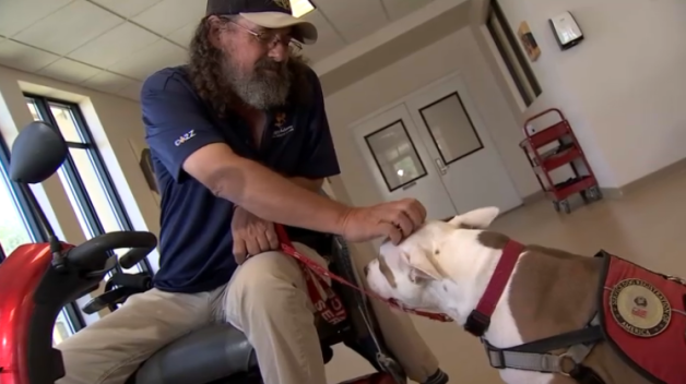 Shelter Dog Becomes Veteran's Best Friend and Helping Hand