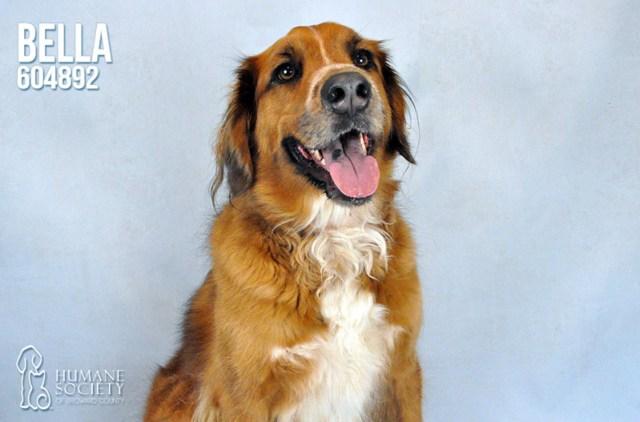 Humane Society of Broward County Pets of the Week - Nov. 16
