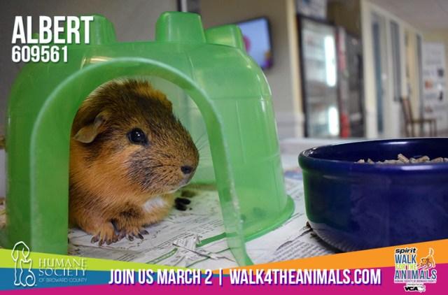 Humane Society of Broward County Pets of the Week - Feb. 22
