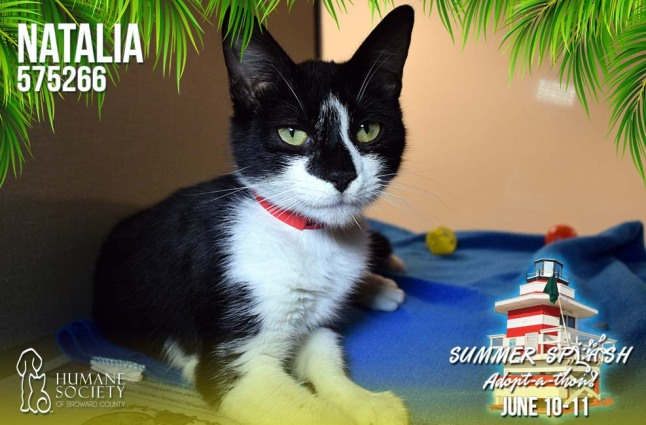 Humane Society of Broward County's Pets of the Week