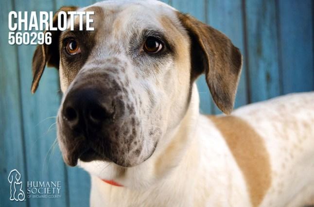 Humane Society of Broward County Pets of the Week - May 3rd