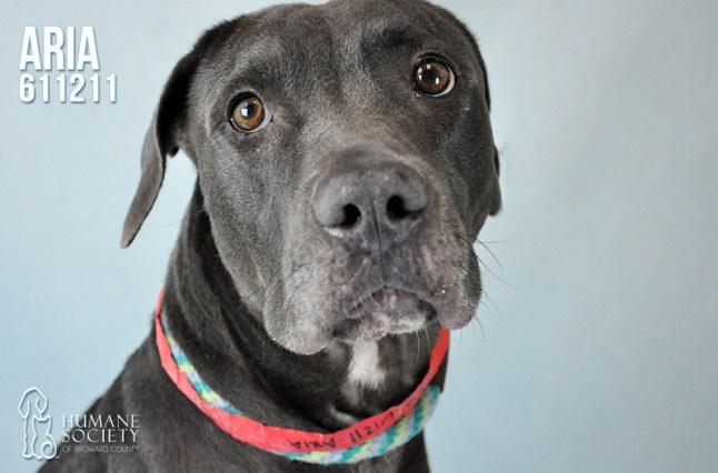Humane Society of Broward County Pets of the Week - May 10