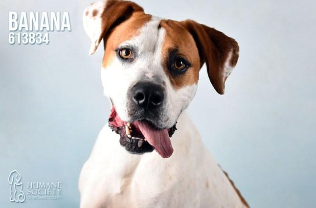 Humane Society of Broward County Pets of the Week - May 16