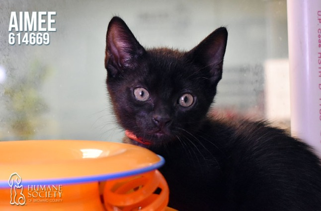 Humane Society of Broward County Pets of the Week - June 7th