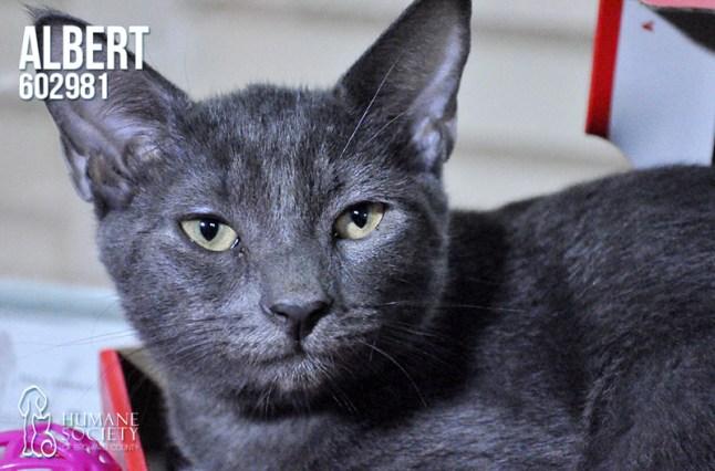 Humane Society of Broward County Pets of the Week - Oct. 11