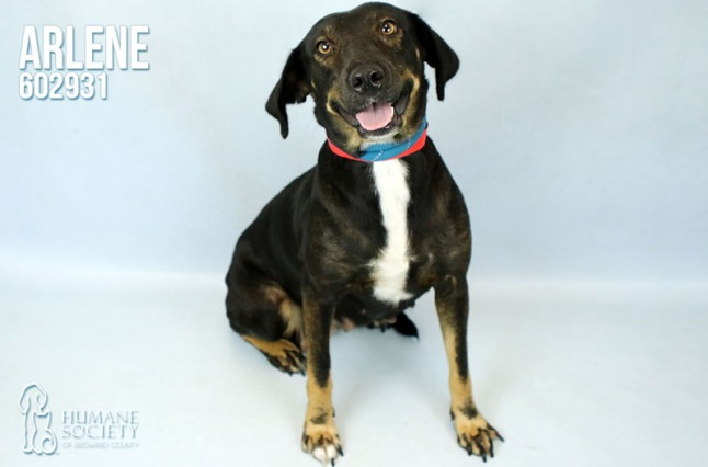 Humane Society of Broward County's Pets of the Week - Oct. 4