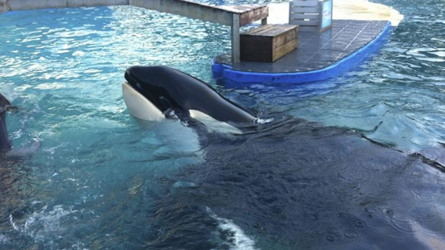 'Free Lolita' Protest Planned Outside Miami Seaquarium