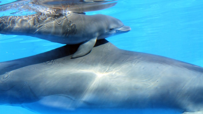 Wounded Veterans Swim With Dolphins in Florida Keys