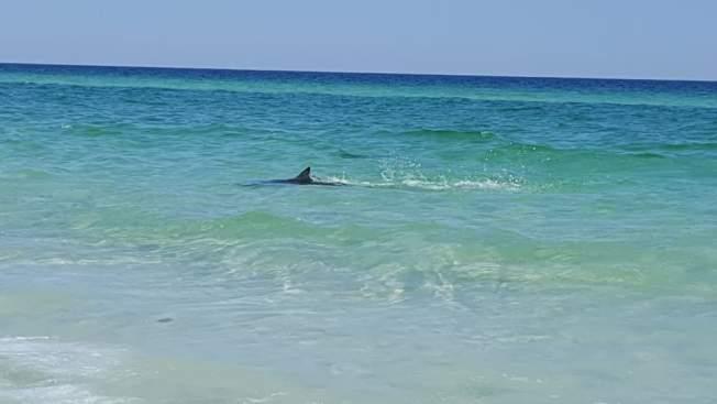 Sharks Appear Close To Shore At Florida Beach
