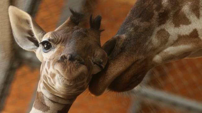 Baby Boom at Gulf Breeze Zoo in Florida Panhandle