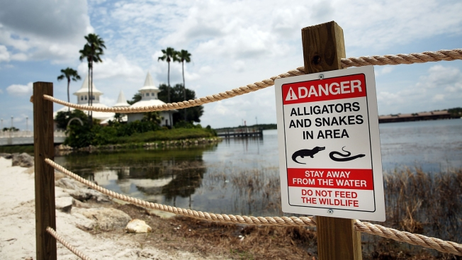 Disney Builds Stone Wall at Lake Where Alligator Killed Boy