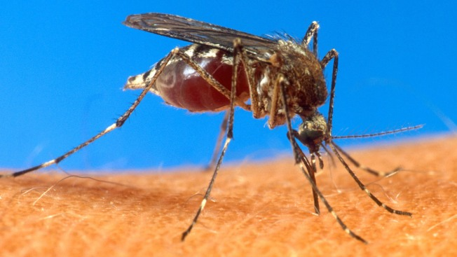 Miami-Dade Dengue Fever Case is 1st of 2014