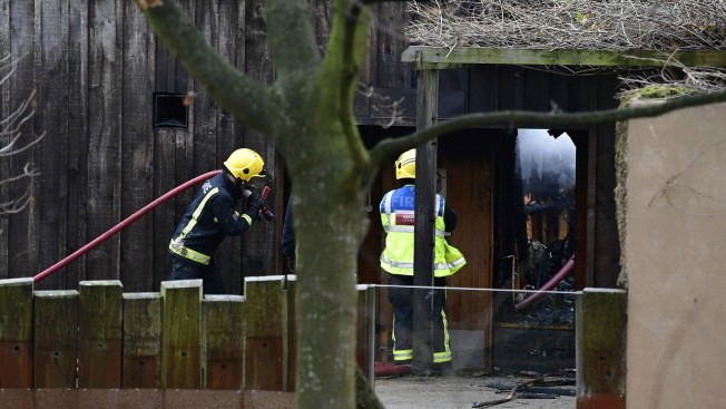 Aardvark Dead, 4 Meerkats Missing in London Zoo Fire