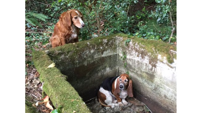 'Remarkable' Dog Tillie Stands Guard Over Trapped Friend for a Week