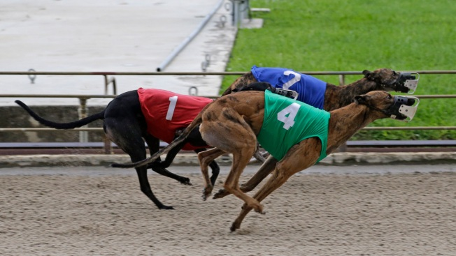 State: Florida Racing Greyhounds Test Positive for Cocaine