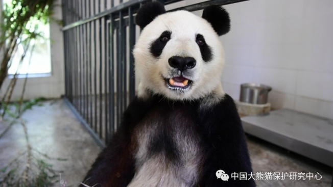 [G] San Diego Zoo's Giant Pandas Return Safely to China