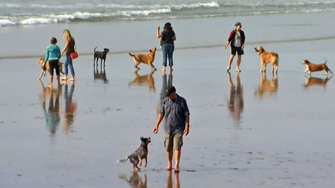 Volusia County Says No to Dogs on Beaches