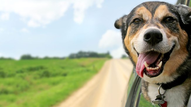 Clear the Shelters: How to Prep Your Home, Family for a New Pet