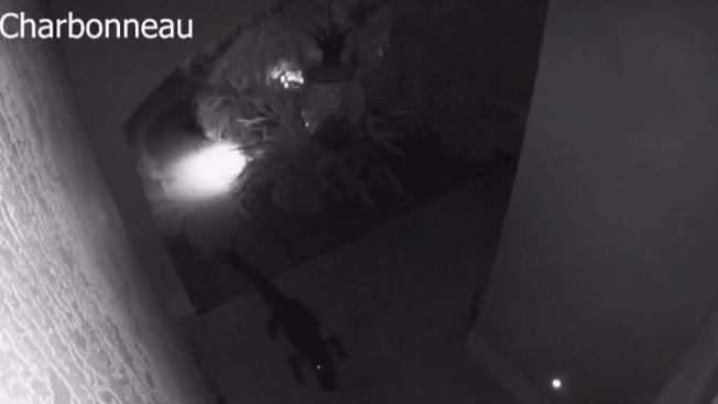 Gator Stuck In Patio Furniture Caught On Camera At Home Near Bradenton Nbc 6 South Florida