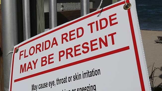 Toxic Red Tide That Has Devastated Florida Since 2017 Not Detected in Waters