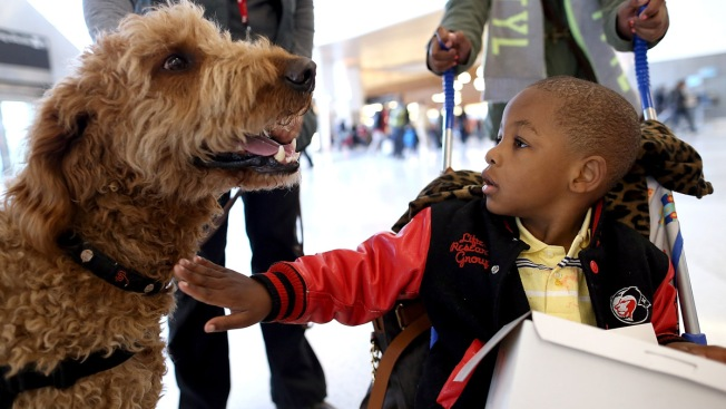 Orlando International Airport Getting Therapy Dogs
