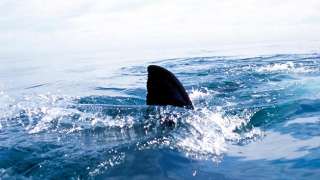 Shark Bites Leg of Man Spearfishing Off Florida Keys
