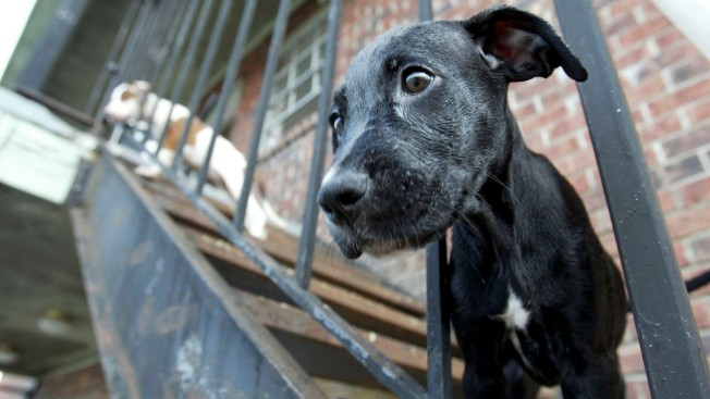 Is Breeding Dogs Illegal In California