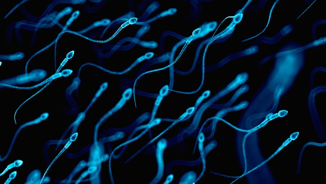 Plunging Sperm Counts a 'Major Public Health' Crisis, Researcher Says