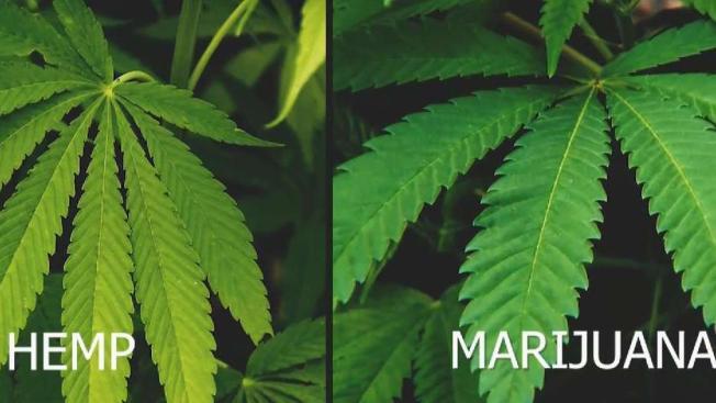 Local Police Struggling to Make Minor Marijuana Arrests
