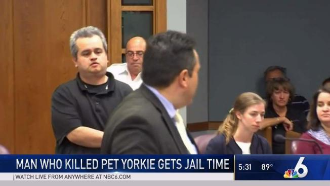 Man Pleads Guilty To Killing Pet Yorkie Found At Miami Beach Publix