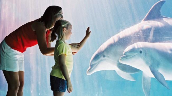 Dolphin Snatches iPad at Orlando SeaWorld