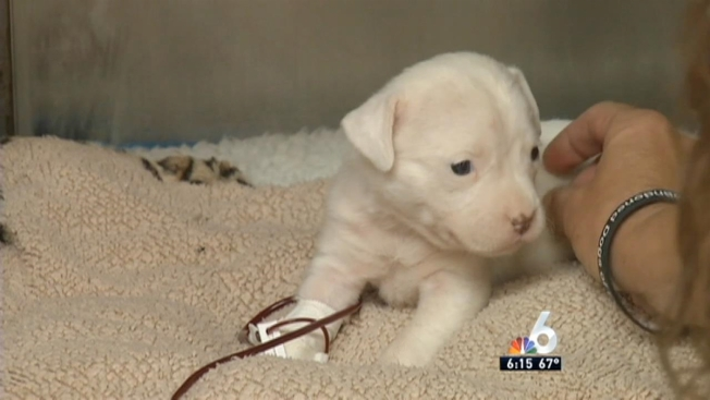 Sick Puppies Purchased On Craigslist From Miami Breeder Nbc 6
