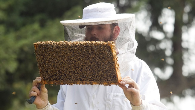 Large Study Links Key Pesticide to Weakened Honeybee Hives
