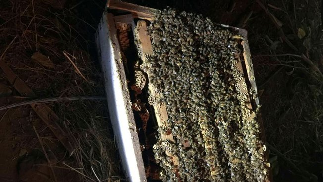 1 Million Bees Killed After Northern California Truck Crash